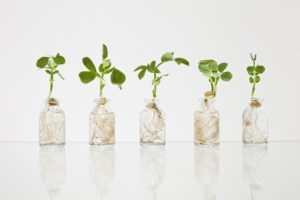 micro greens concept